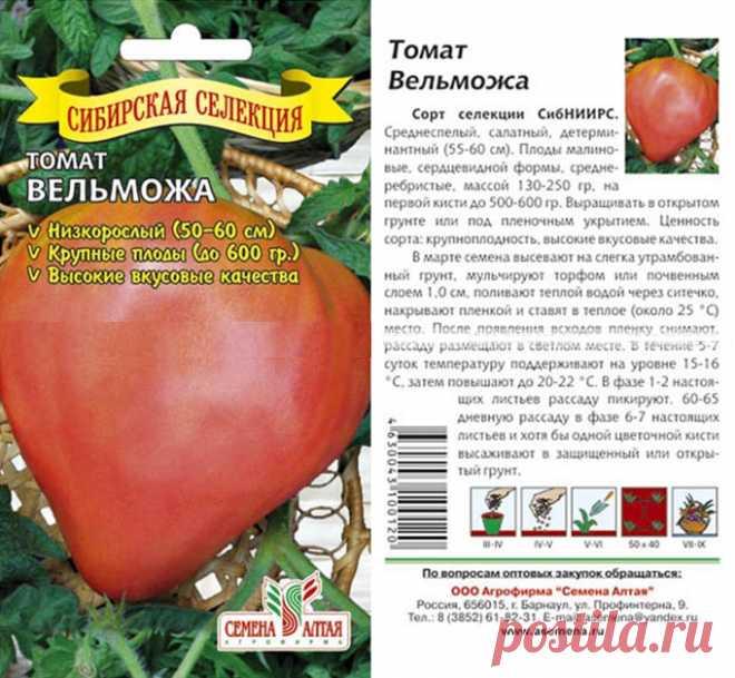 томат вельможа отзывы фото кто сажал николаса