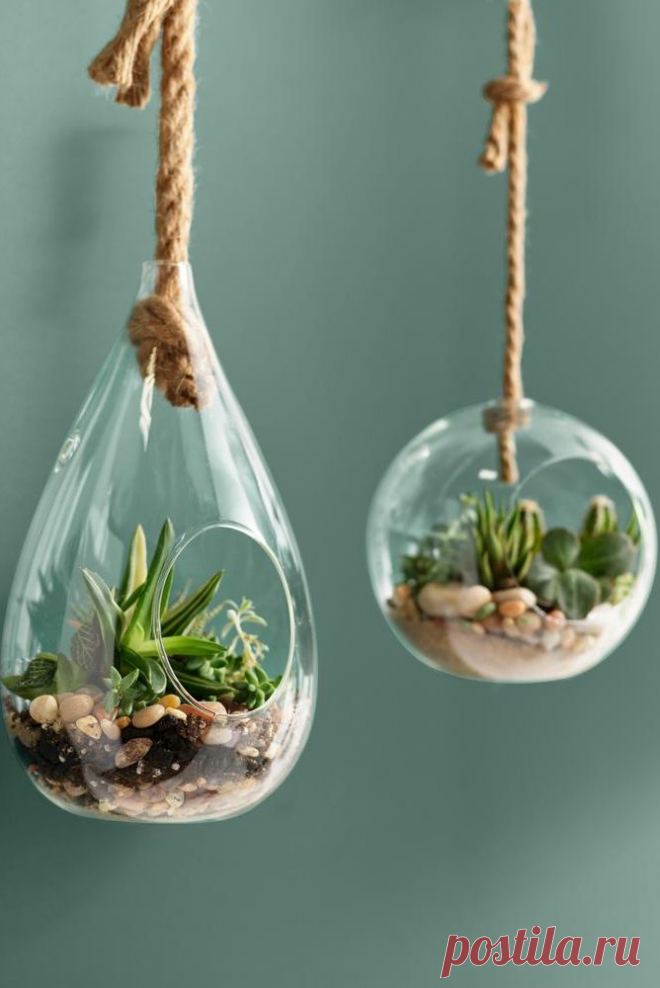 15 идей вертикального сада, которые украсят ваш дом и дачу | Плюшкин-Вилль | Яндекс Дзен
