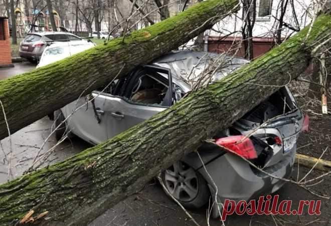 Если на машину упало дерево, что делать, куда звонить и как добиться компенсации? - Коблева Елена Николаевна, 22 июня 2020