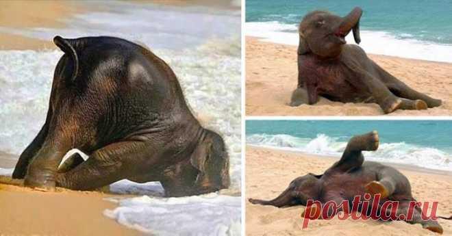 Слоненок, впервые увидевший море 🐘 😄