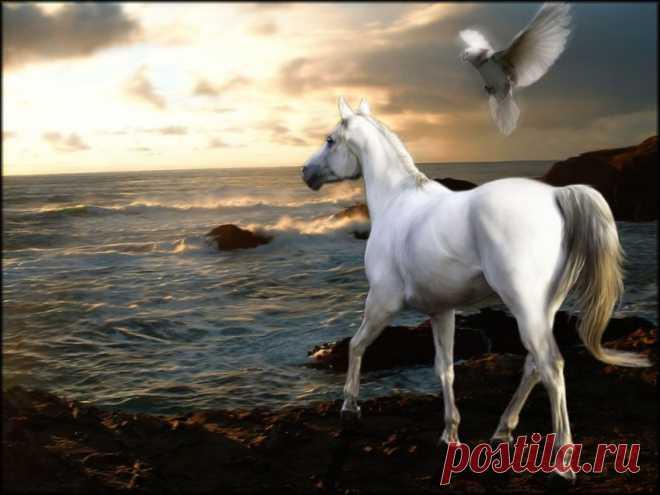 Незабываемые картинки и фото с камаргу и русской верховой лошадьми