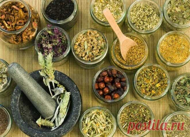 Phytotherapy and liver - we are treated by herbs correctly ЗДОРОВЬЕ: Лечение растениями Postila