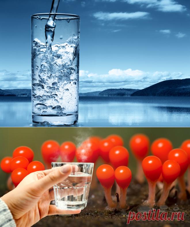 Зачем пить водуНужное количество жидкости зависит от пола, возраста, веса, физических нагрузок, окружающей среды, питания и других признаков. Согласно статистическому исследованию Института медицины США, мужчинам достаточно употреблять в день 3,7 л жидкости, а женщинам — около 2,7 л. И не имеет значения, в каком виде вода поступает в организм: в виде сока, чая, супа, овощей или фруктов.