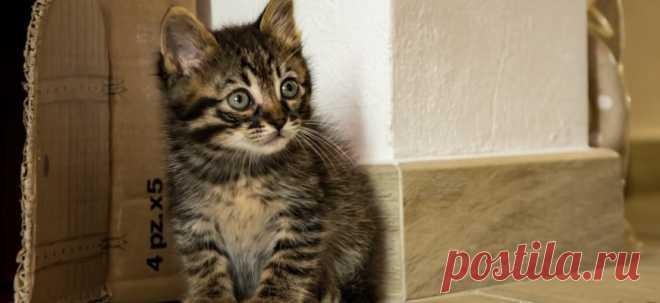 5 признаков, что вы готовы завести кошку   PetTips