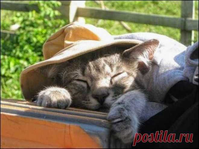 Котик-дачник