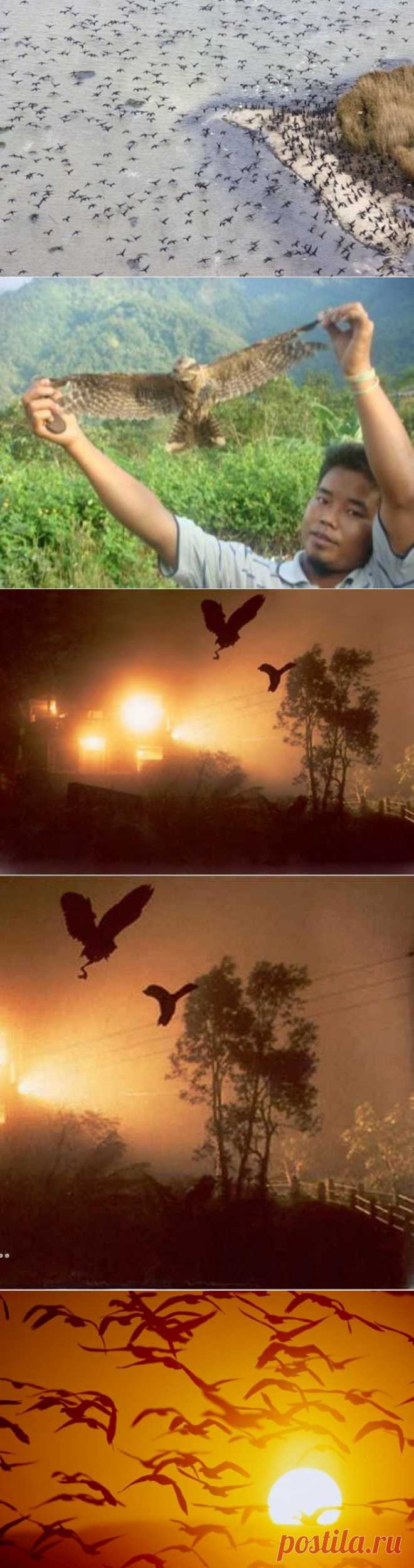 Загадки природы: долина падающих птиц