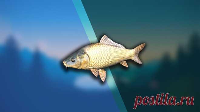 Сохранение пойманной рыбы и ее использование в пищу