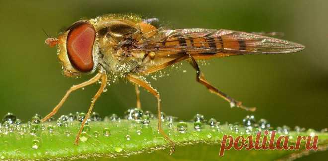 Люди, как и плодовые мушки, выбирают себе пищу неосознанно Мухи, проводя большую часть жизни в поисках пропитания, отдают предпочтение сладкой, богатой питательными веществами пище и избегают горькой, где могут быть токсины. Оказалось, что изучение механизма выбора пищи у мух позволяет понять, как мы сами выбираем продукты себе на ужин Животные принимают решение о выборе той или иной пищи, «оценивая» как степень своего голода, так […] Читай дальше на сайте. Жми подробнее ➡