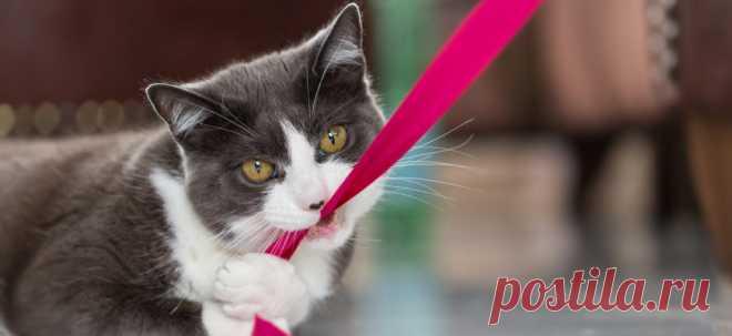 10 советов, как сохранить умственные способности вашей кошки   PetTips