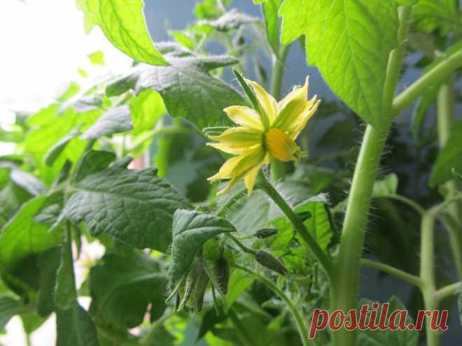 План работ в саду и огороде на июнь (23 пункта) | Дом+ | Яндекс Дзен