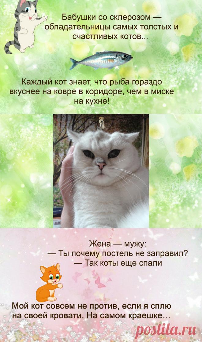 Жизненные анекдоты про кошек | Иржины заметки | Яндекс Дзен.