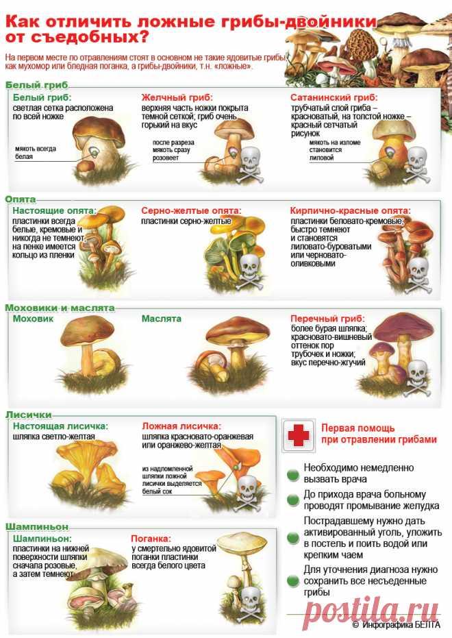 Ядовитые грибы России: Как определить ядовитый гриб, как отличить съедобный гриб (КАРТИНКИ, ФОТО)