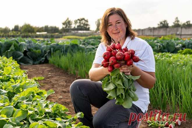 Длина дня — влияние на развитие овощей — Ботаничка.ru