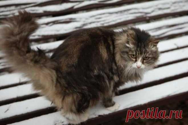 Кошка Муся живёт в больничном подвале и помогает медикам спасать жизни людей 🏥🐈