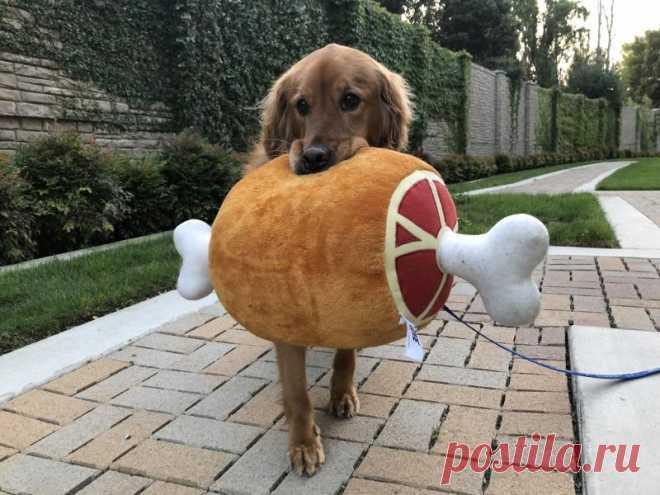 Забавные фото собаки которая отказывается выходить из дома без мягкой игрушки