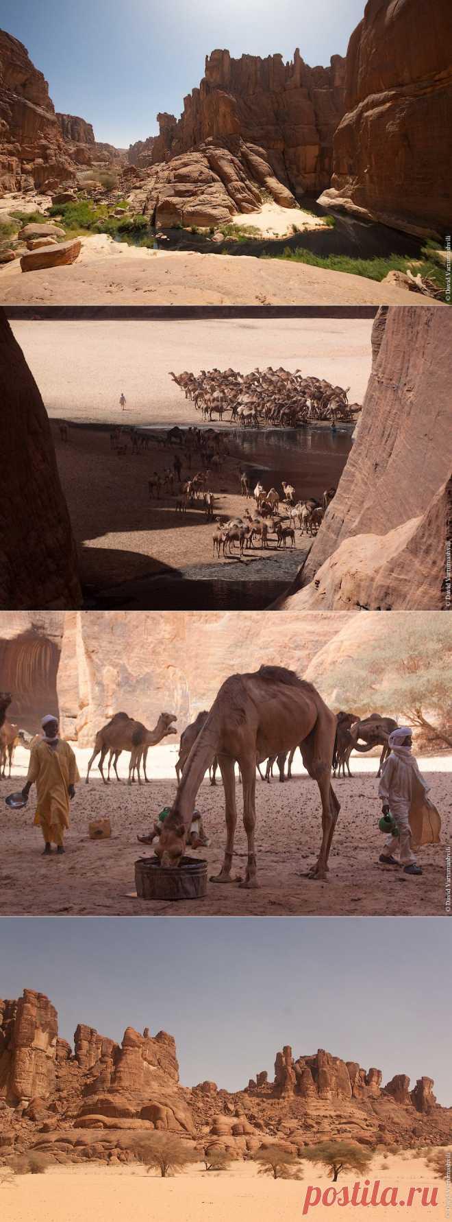 >> Гельта д'Аршей в пустыне Сахара