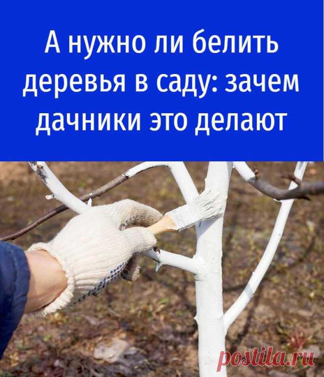 А нужно ли белить деревья в саду: зачем дачники это делают
