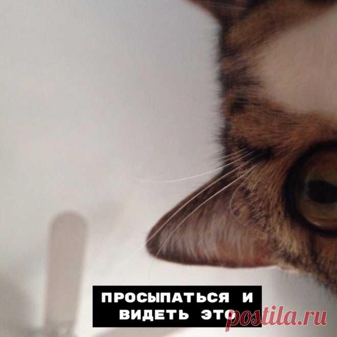 В совместной жизни с котом есть несколько нюансов — Убойный юмор