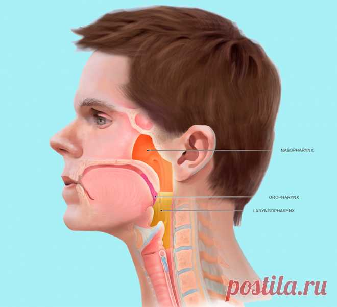 О чём предупреждает  нас «ком в горле» Наиболее часто встречающейся жалобой пациентов на приеме гастроэнтеролога, является чувство сжатия или переполненности шеи, ощущение инородного тела – ком в горле.