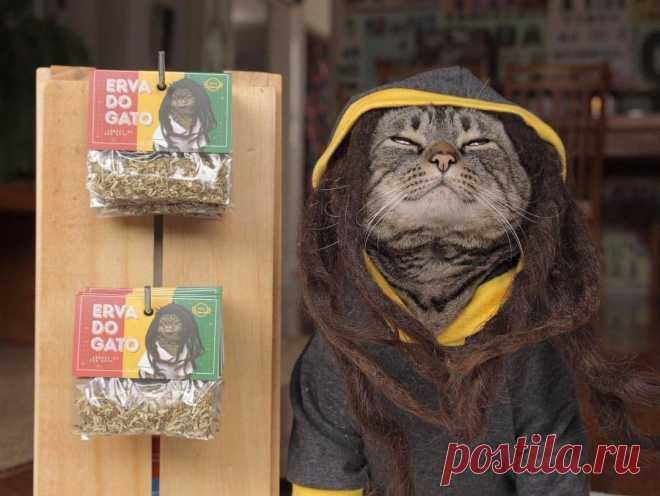 В Инстаграме набирает популярность кот Чико в своих оригинальных образах. И, похоже, он сам от себя без ума
