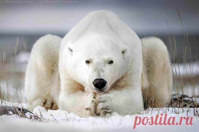 Красивые фотографии диких животных