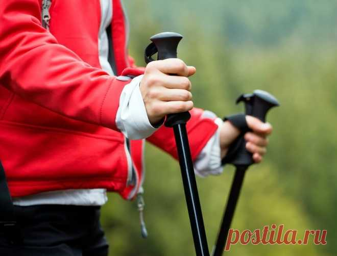 Скандинавская ходьба: Волшебные палочки, которые помогли мне перейти на ЗОЖ после 50 лет   ЗОЖ и Галка   Яндекс Дзен