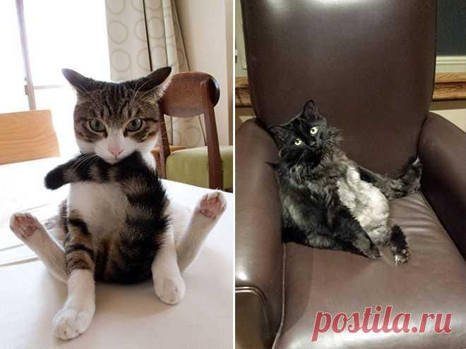 Уморительные фотографии котов
