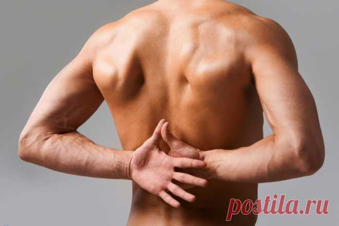 Muscular clips of a neck and back