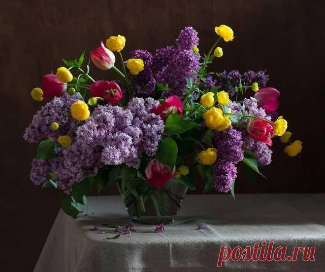 Расцвёл цветок, И мир наполнил красотою, И жизнь мою украсил! в Яндекс.Коллекциях