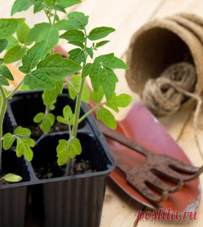 Какой должна быть температура для выращивания рассады Чтобы вырастить качественную рассаду, нужно обеспечить ей соответствующий температурный режим и уровень влажности, организовать полив и подкормки. Как показывает практика, чаще всего проблемы возникаю...