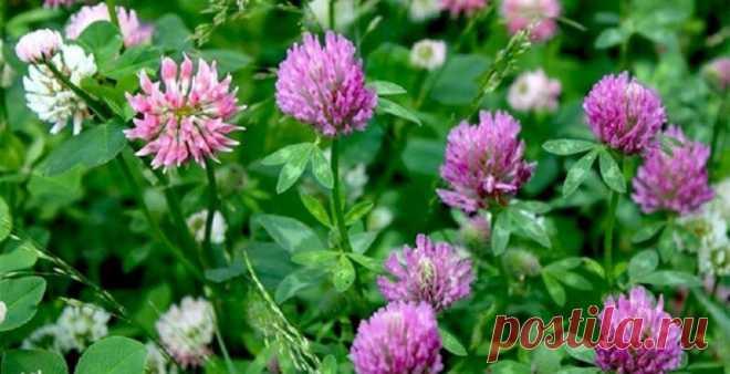 Названы 5 растений, которые укрепляют кости после 40-ка лет | ЗДРАВОВЕД | Яндекс Дзен