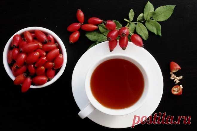 Как пить шиповник: польза, вред, советы экспертов   Саша Коновалова   Яндекс Дзен