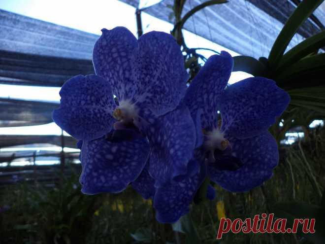 Ферма Орхидей, там меня научили, как правильно ухаживать за Орхидеями | Я люблю цветы | Яндекс Дзен