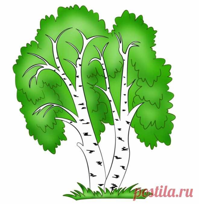 Картинки деревьев россии для детей береза