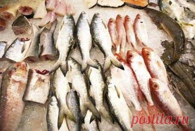 """13 видов рыбы, которые нельзя есть Употребление в пищу морепродуктов считается очень здоровым, не так ли? На самом деле всё не так однозначно. """"Загрязнения в море значительно увеличивают риски ухудшения здоровья как окружающей среды в ..."""