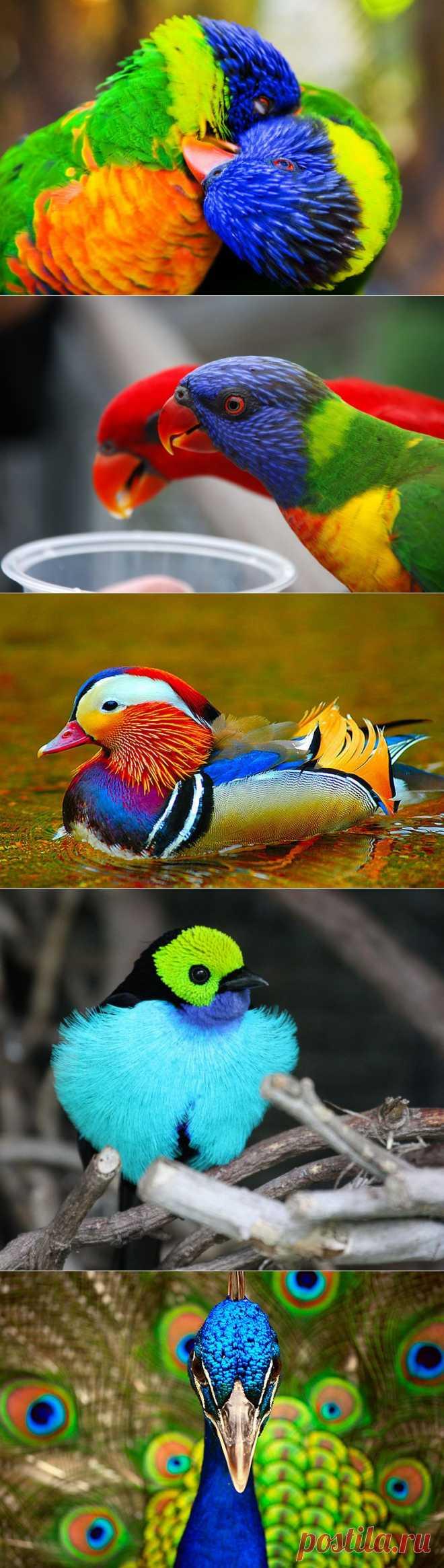 40 прекрасных фотографий птиц :  НОВОСТИ В ФОТОГРАФИЯХ