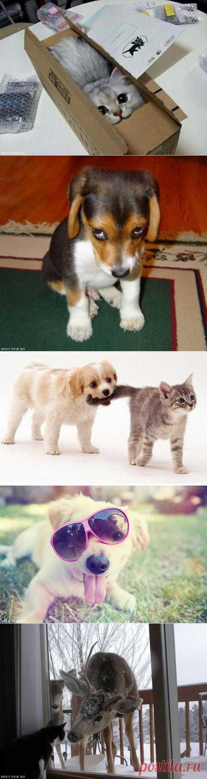 Прикольные и смешные животные. (47 фото)   Картинки животные