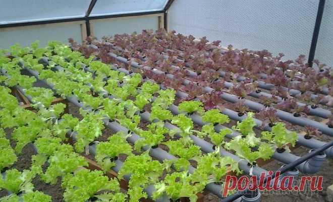 микрозелень выращивание в теплице