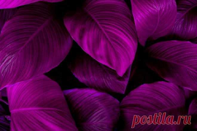 10 потрясающих комнатных фиолетовых растений, которые преобразят ваш дом или офис | Цветы Голландии | Яндекс Дзен
