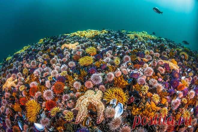 30 потрясающих подводных снимков конкурса Ocean Art 2019 — Российское фото