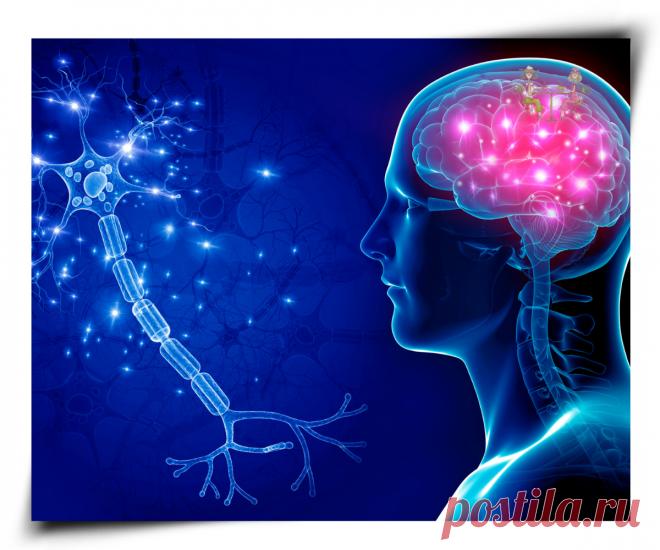 4 простых упражнения для сохранения здоровья мозга до глубокой старости | Поговорим о жизни за чашкой кофе | Яндекс Дзен