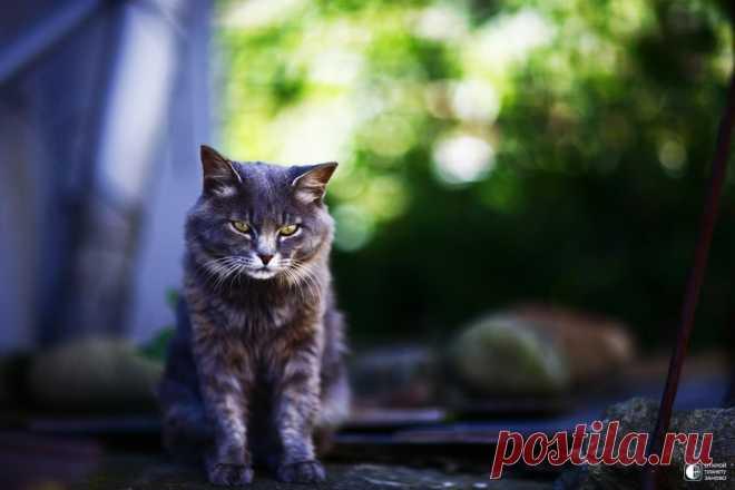 Остров кошек в Японии - Путешествуем вместе
