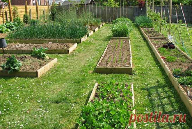 как правильно разбить огород на грядки фото