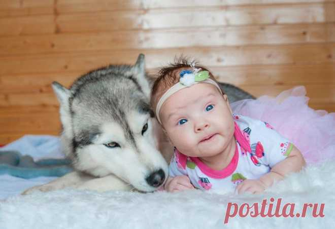 Как помочь собаке пережить стресс | Рекомендательная система Пульс Mail.ru