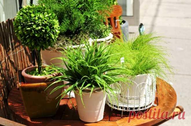 Удобрения для комнатных растений, которые можно сделать самим :: хорошее удобрение для комнатных растений :: Цветоводство