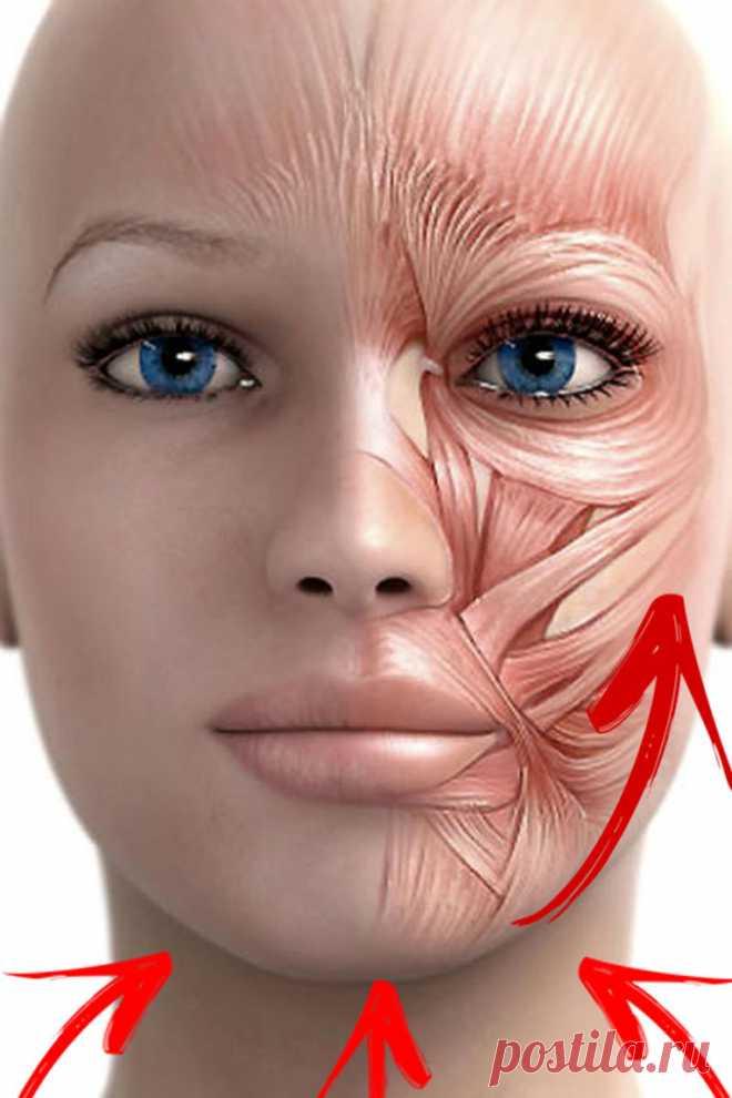 Упражнение «Точеный подбородок»: подтягиваем щеки и улучшаем овал лица