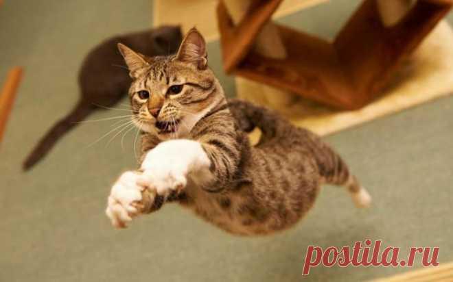 Los hechos interesantes sobre los gatitos, que podíais no saber