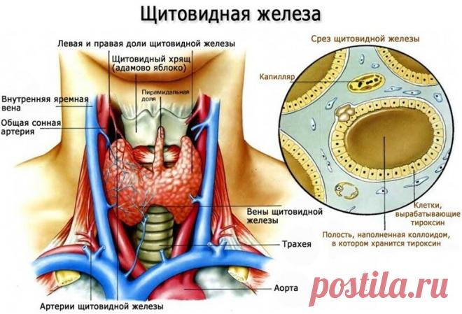 Какой самый Главный симптом Гипотиреоза? | Клиника щитовидной железы | Яндекс Дзен