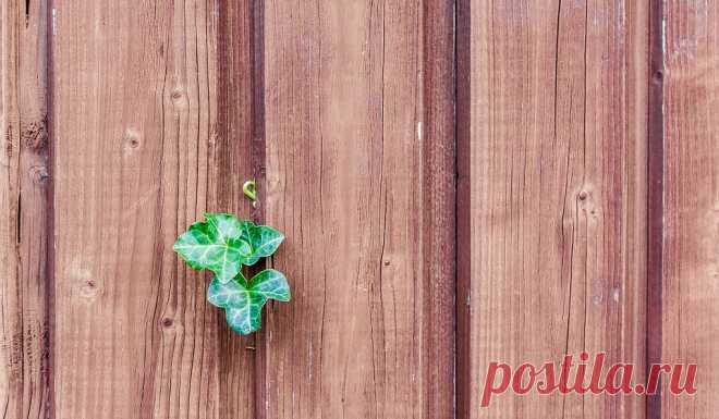 Забор между соседями в частном доме: на каком расстоянии должен быть и какой высоты?