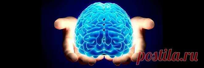Качаем мозг. И это не фантастика | ПроЧтение | Яндекс Дзен